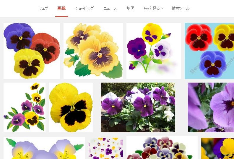 パンジー フリー素材 - Google 検索